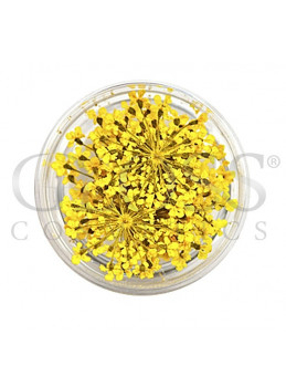 Tørkede Blomster Gold