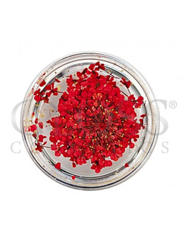 Tørkede Blomster RED